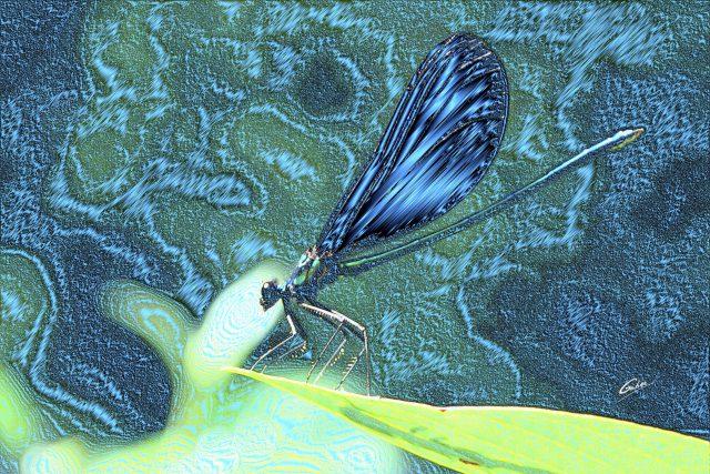 Damsel Fly  03