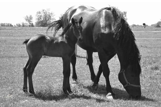 Horses  09