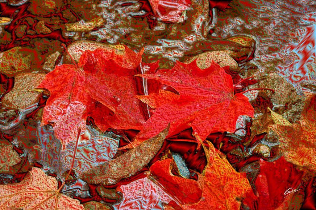 Fall Scenes 01