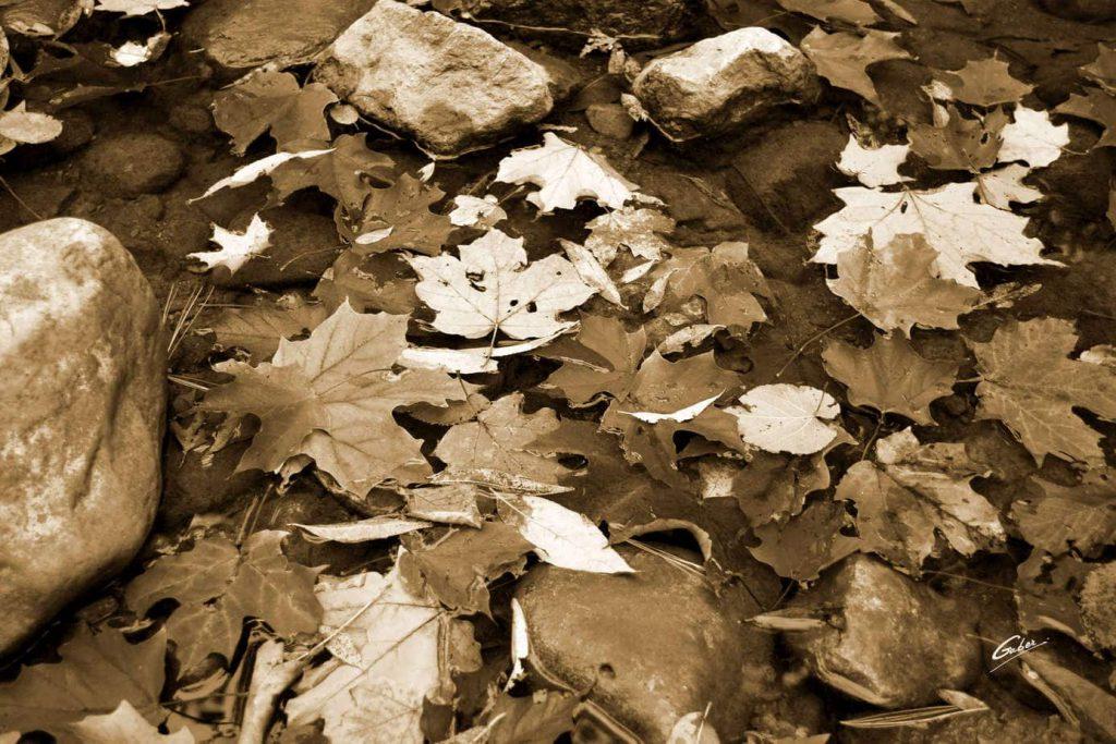 Fall Scenes 02