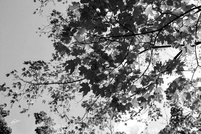 Fall Scenes 13