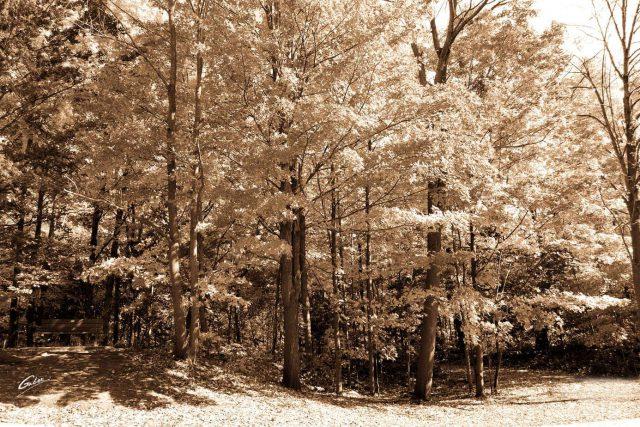 Fall Scenes 19