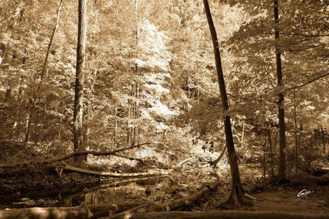Fall Scenes 24
