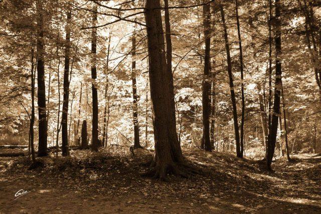 Fall Scenes 33