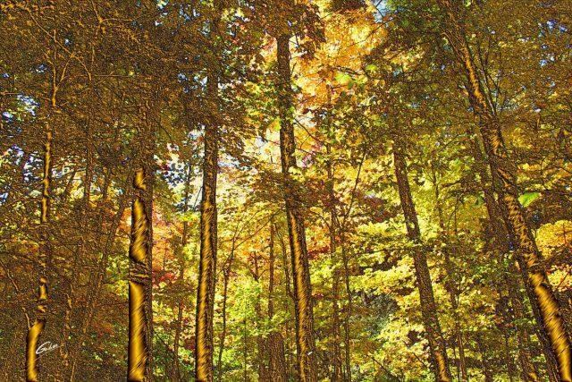 Fall Scenes 35