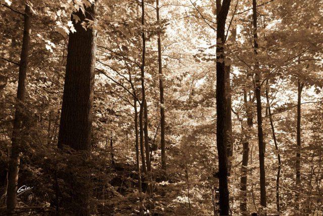 Fall Scenes 55