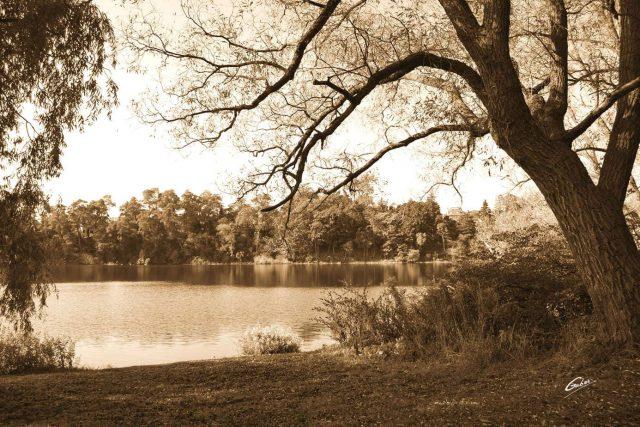 Fall Scenes 65