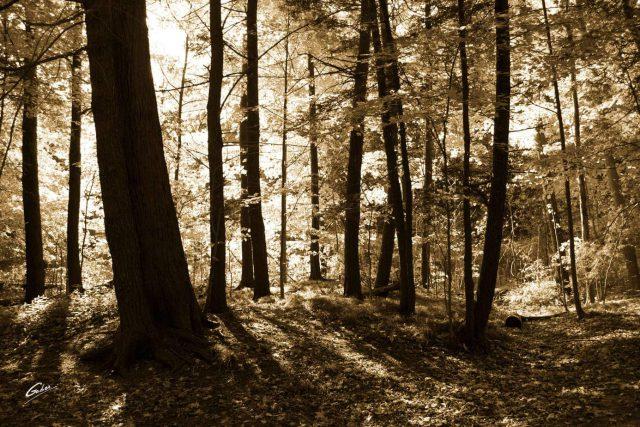 Fall Scenes 102