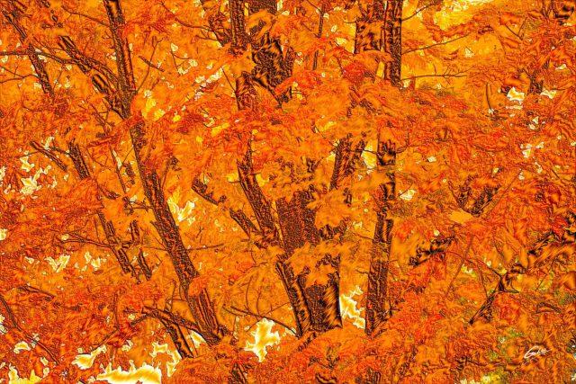 Fall Scenes 119
