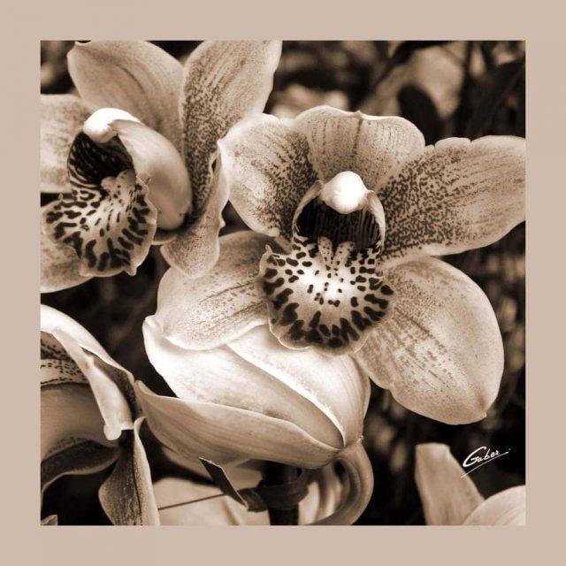 Orchid Cymbidium 02