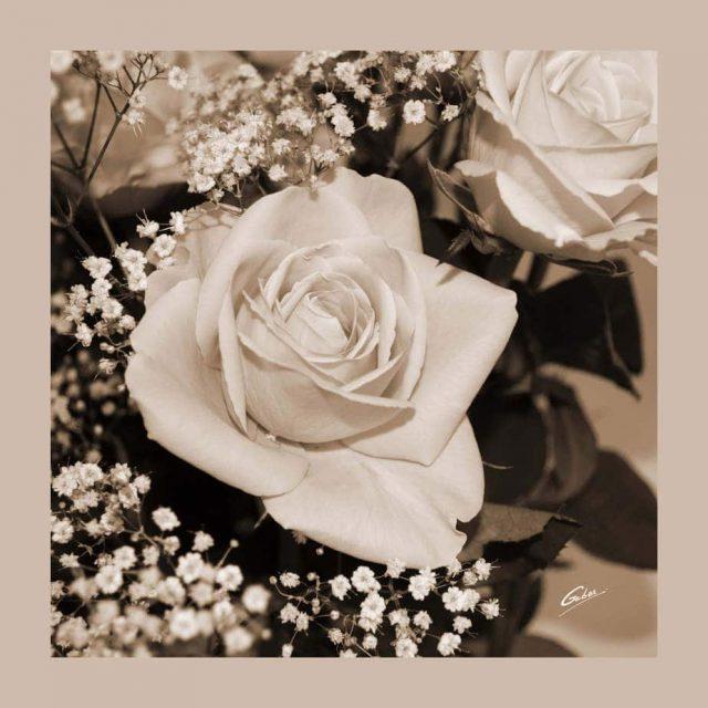 Rose Bouquet 09