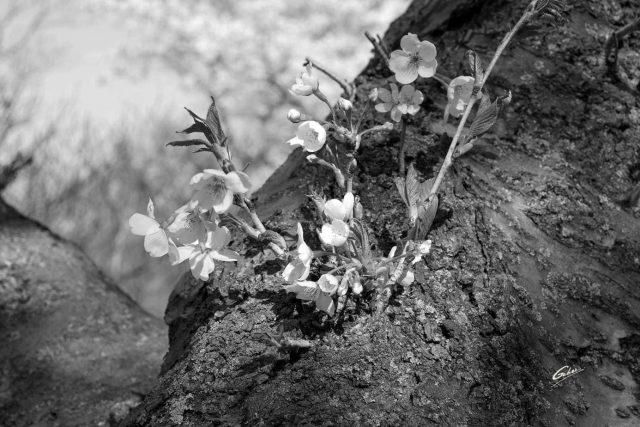 Spring Scenes 20