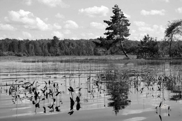 Summer Scene Cawartha Ontario 33