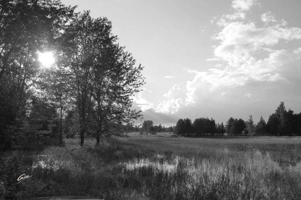 Summer Scene Cawartha Ontario 05