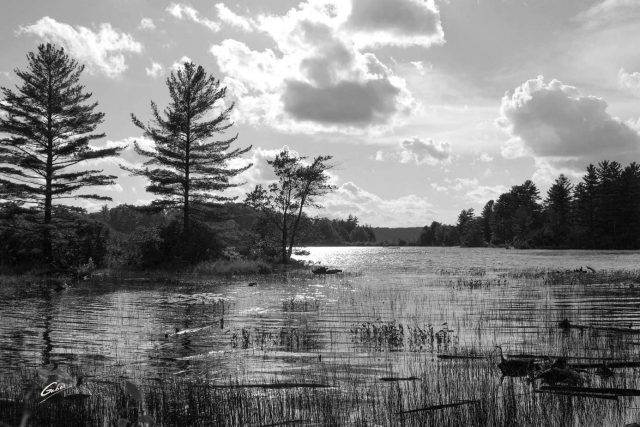 Summer Scene Cawartha Ontario 53