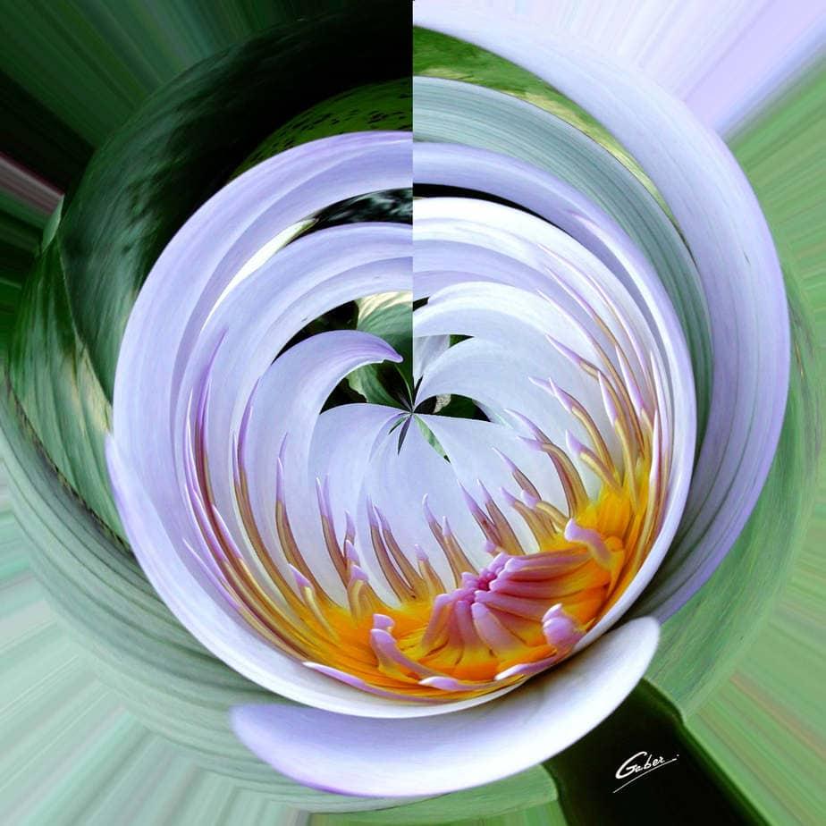 Water-lillies-37bd01_SW_F1_071FINAL.jpg