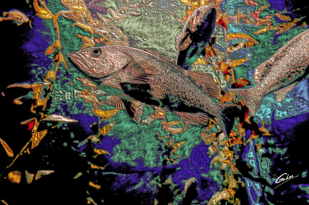 Atlantic Cod( Gadus morhua) 2021  01
