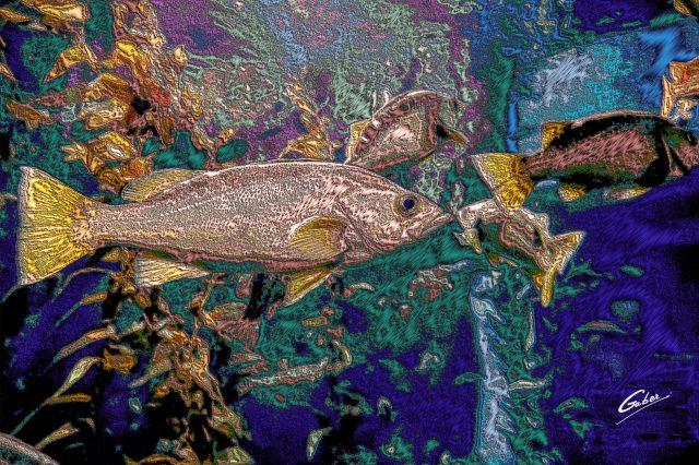 Atlantic Cod( Gadus morhua) 2021  02