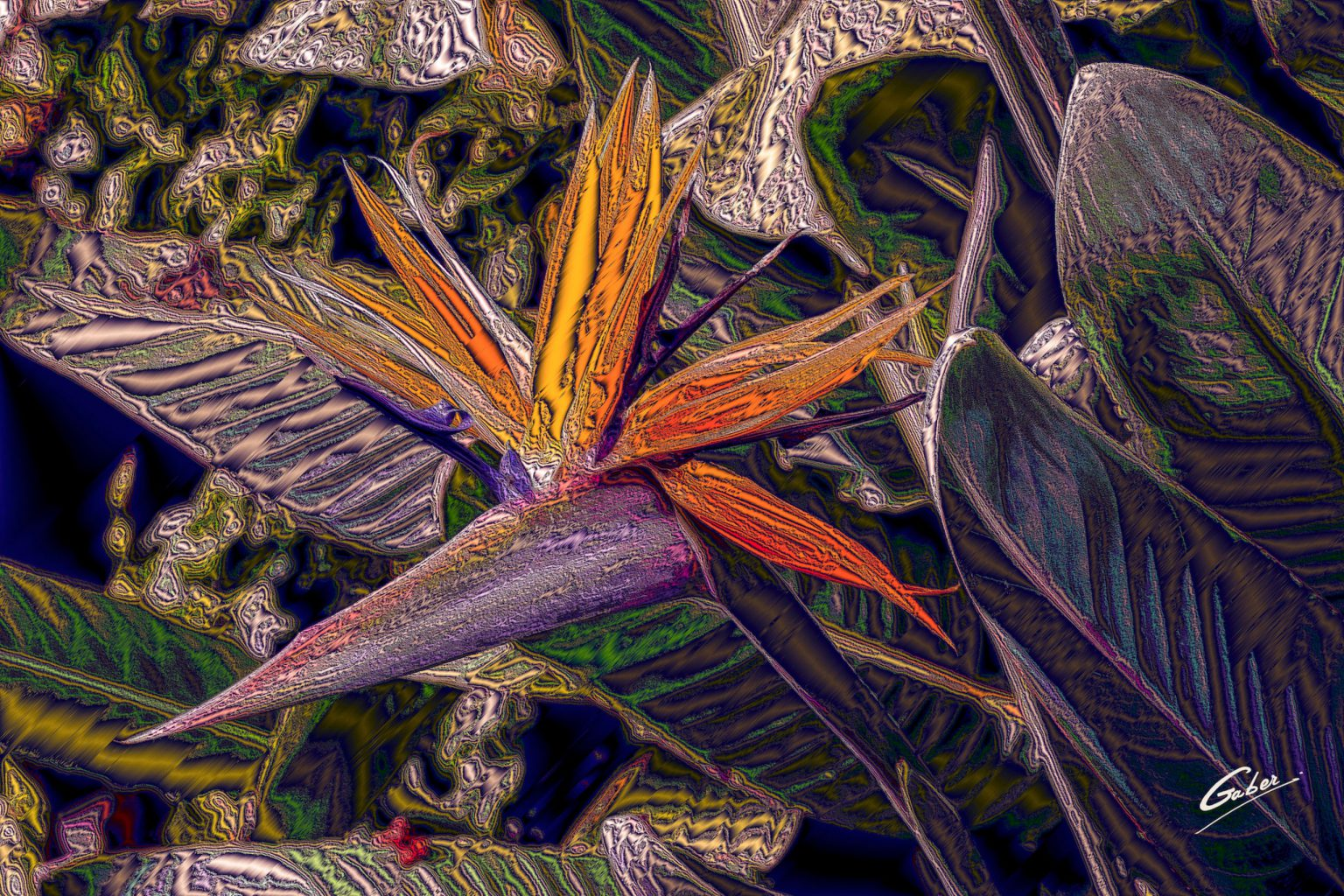 Bird_of_Paradise_2020_02d07x_ERP_FINAL_16x24_GAB_ERPF20-56