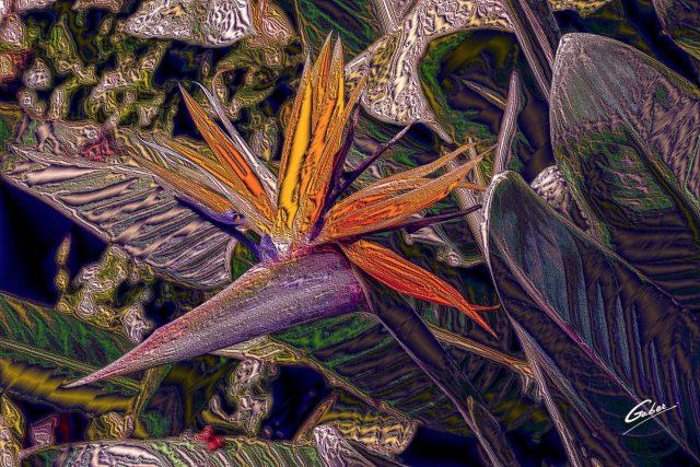 Bird of Paradise 2020  01