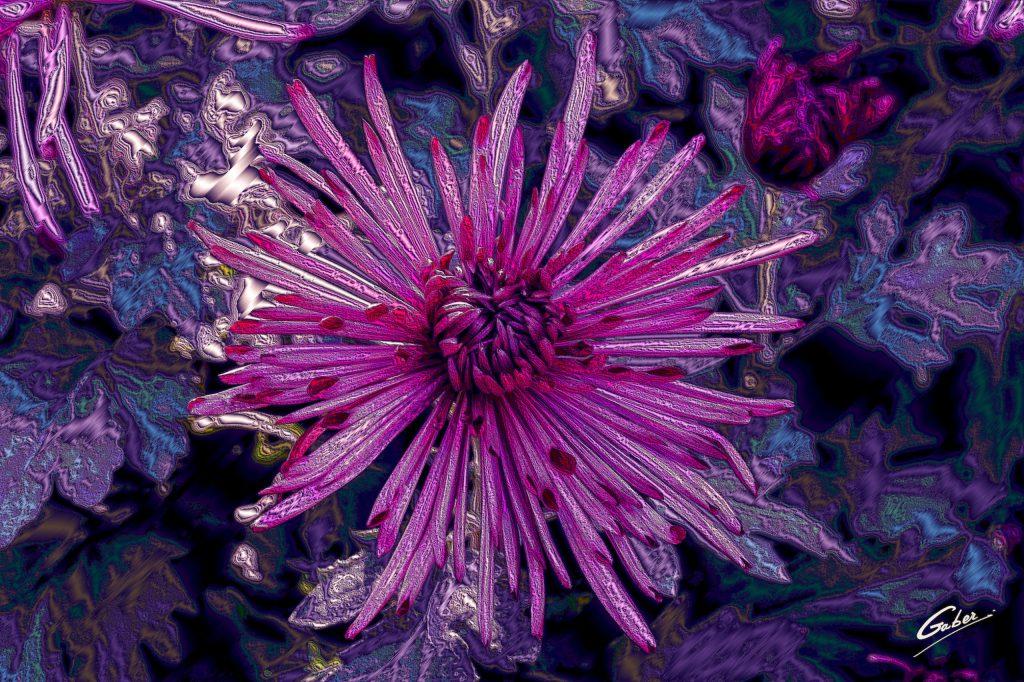 Chrysanthemum Quill 2020 09