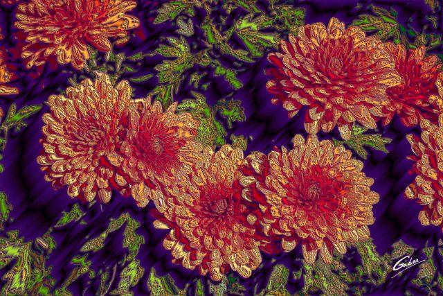 Chrysanthemum grandiflorum 2020 01