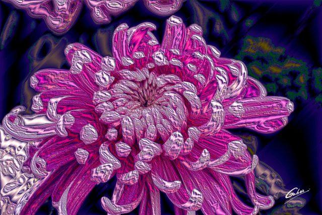 Chrysanthemum morifolium 2020 01
