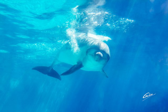 Dolphin(Delhinus delphis) 2019  02
