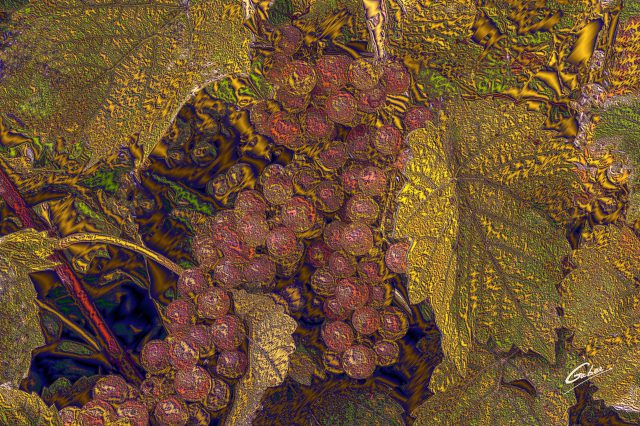 Green Grapes on wine tree 2018  03