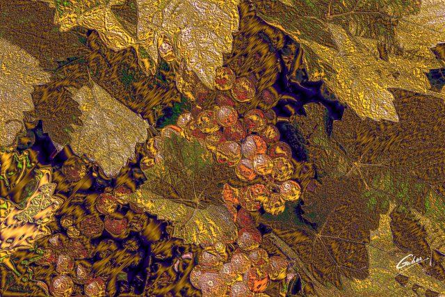 Green Grapes on wine tree_04d07x_16x24_FINAL_GAB-ERP-W18-04