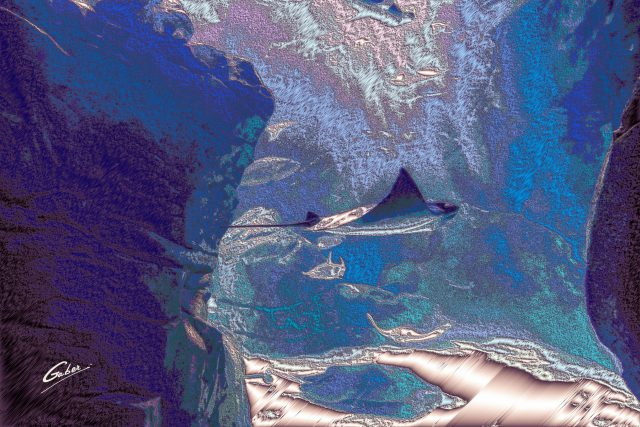 Manta ray (Manta birostris) 2021 01