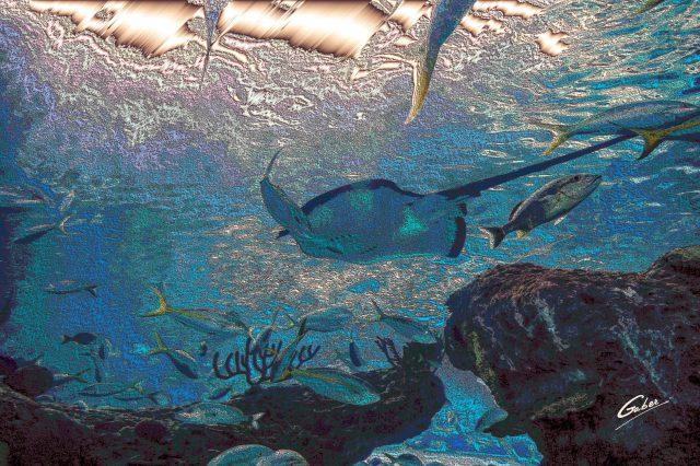 Manta ray (Manta birostris) 2021 02