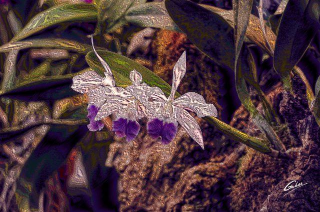 Orchids Cattleya 2020 01