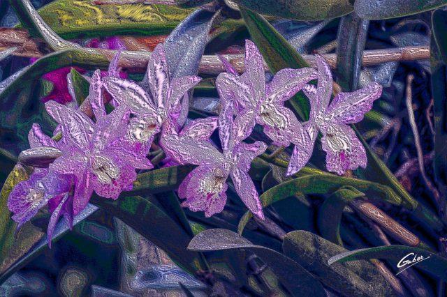 Orchids Cattleya 2020 02