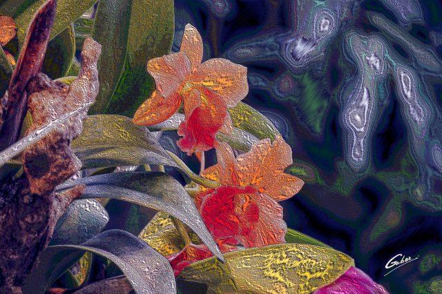 Orchids Cattleya 2020 03