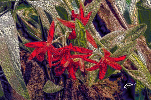 Orchids Cattleya 2020 04
