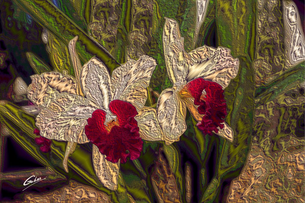 Orchids Cattleya 2020 05