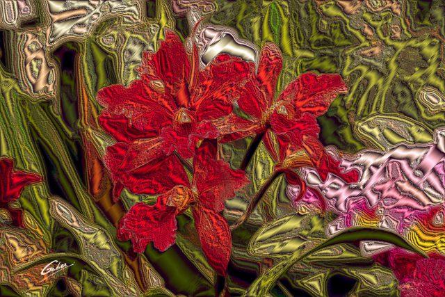 Orchids Cattleya 2020 06