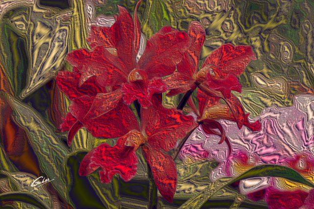 Orchids Cattleya 2020 07