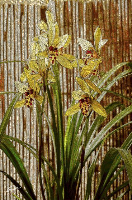 Orchids Cymbidium 2020 04
