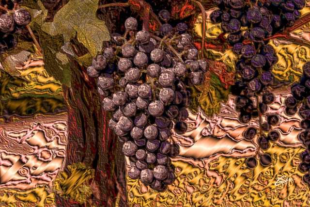 Red Grapes on wine tree 2018 04