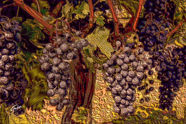 Red Grapes on wine tree 2018 06