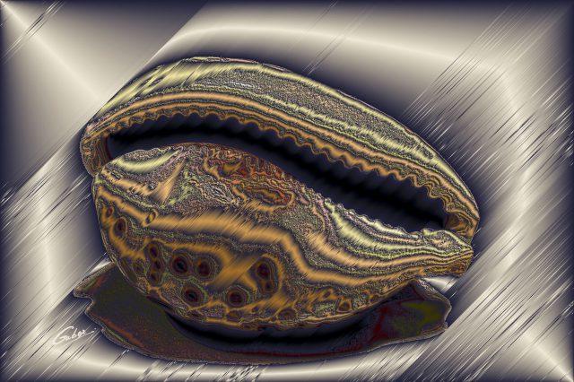 Sea Shells 2021 01