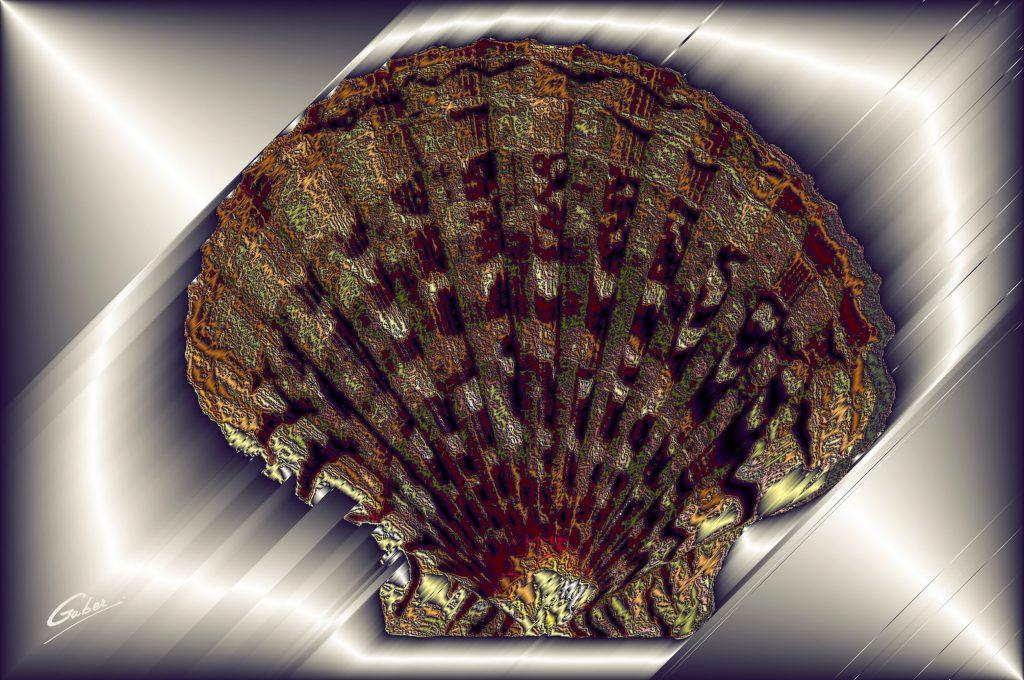Sea Shells 2021 03
