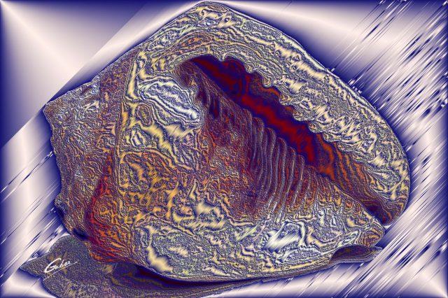 Sea Shells 2021 05