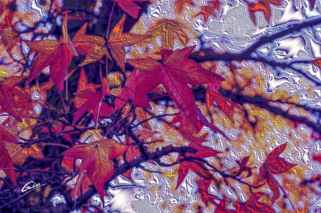 Trees Late Fall  01