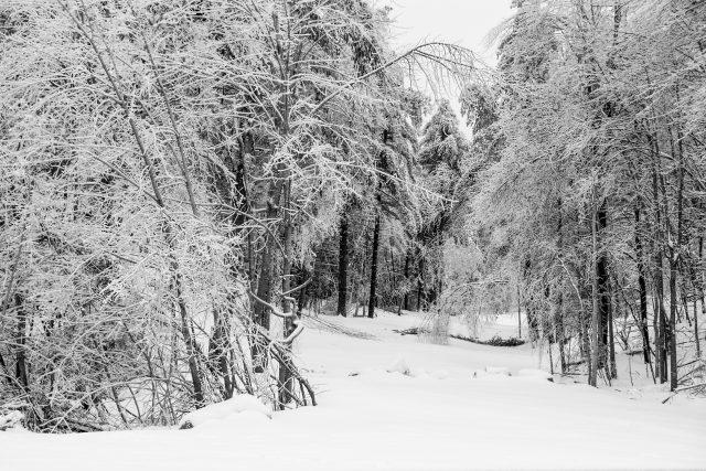 Winter Scenes 2018  01