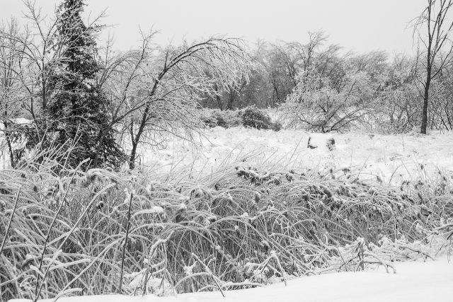 Winter Scenes 2018  02