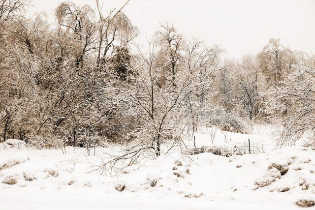Winter Scenes 2018  03