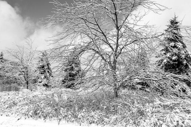Winter Scenes 2018  04